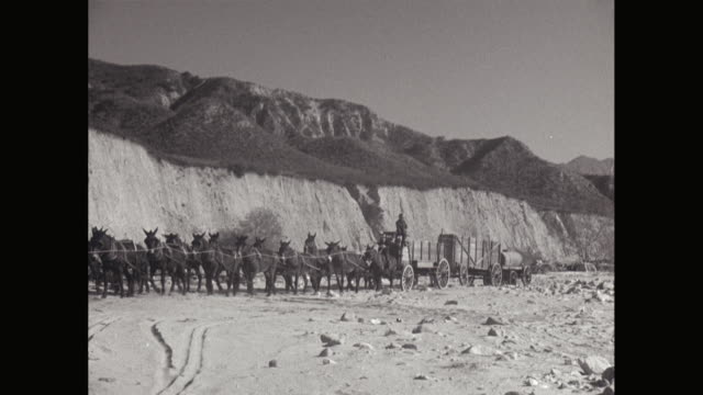 ws pan team of donkeys pulling carts in desert with mountains in background / united states - mule stock videos & royalty-free footage