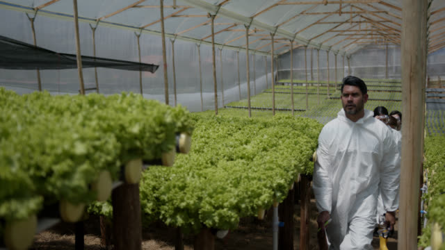 vídeos de stock e filmes b-roll de team of people working at a hydroponic lettuce crop wearing protective workwear leaving after their shift - inseticida