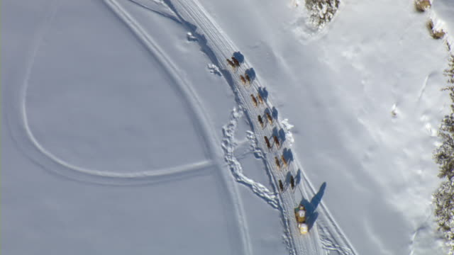 a team of sled dogs and a musher race across the winter landscape during the yukon quest sled dog race in canada. - そり犬点の映像素材/bロール