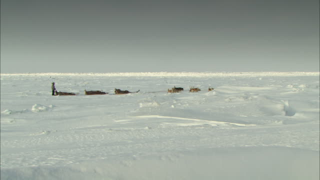 A team of sled dogs pulls three sleds over the desolate terrain of Alaska.