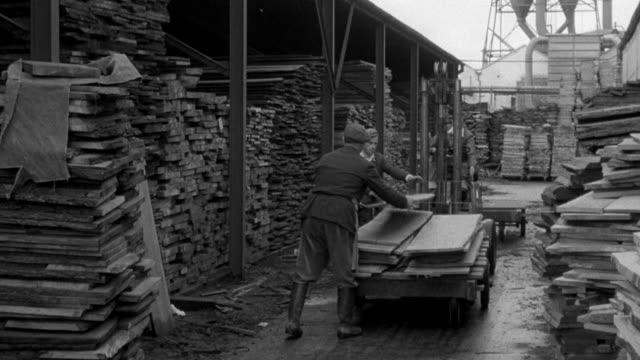 1955 MONTAGE Team of workers cutting and unloading timber at the sawmill / United Kingdom