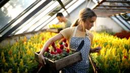 Teamwork in greenhouse