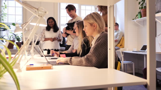 stockvideo's en b-roll-footage met teamwork in moderne coworking-ruimte-multi-etnische groep van professionals die samenwerken - scandinavisch schiereiland