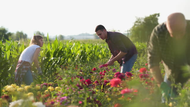 teamwork - gardening glove stock videos & royalty-free footage
