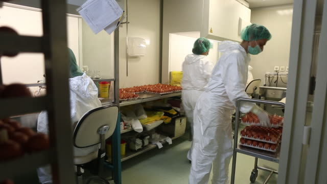 """technicians of institute of virology, vaccines and sera """"torlak"""" perform inoculation method to inject a virus into embryonated hens' eggs during... - serbien stock-videos und b-roll-filmmaterial"""