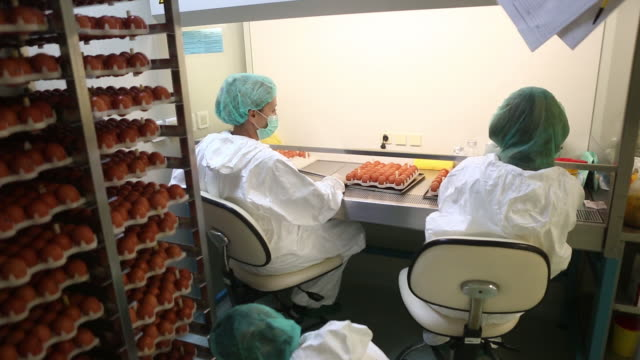 """technicians of institute of virology, vaccines and sera """"torlak"""" perform inoculation method to inject a virus into embryonated hens' eggs during... - 黄色ブドウ球菌点の映像素材/bロール"""