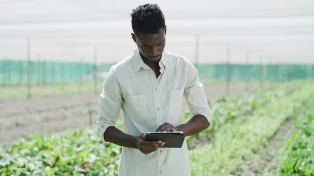 technology helps ease his workload on the farm - greenhouse stock videos & royalty-free footage