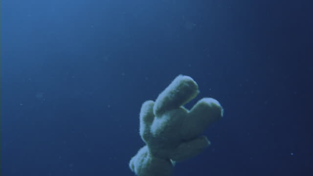 a teddy bear floats underwater. - floating on water stock videos & royalty-free footage