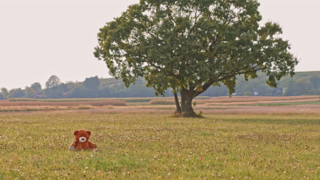DS Teddy bear in a meadow
