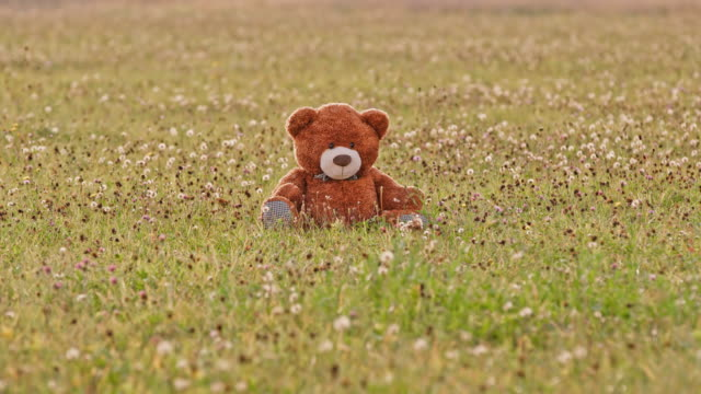 DS Teddy bear in grass