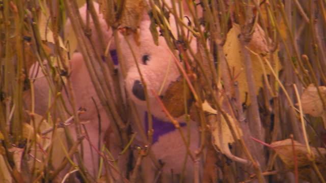 Teddy bear stuck in plants