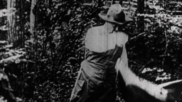 Teddy Roosevelt chopping down tree / USA