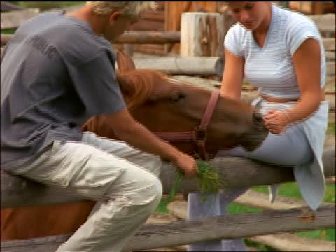 vídeos y material grabado en eventos de stock de teen couple sitting on fence feeding + petting horse / montana - rancho