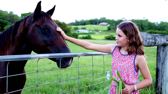 teen girl patting horse over fence on farm - all horse riding stock videos & royalty-free footage