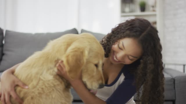 teen petting dog - adoption stock videos & royalty-free footage