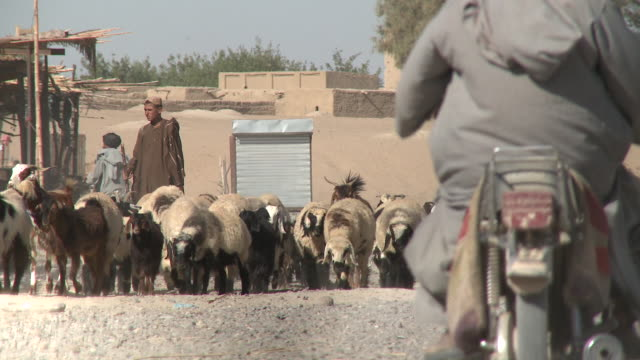 a teenage afghan shepherd herds a flock of sheep and goats through a village. - shepherd stock videos & royalty-free footage