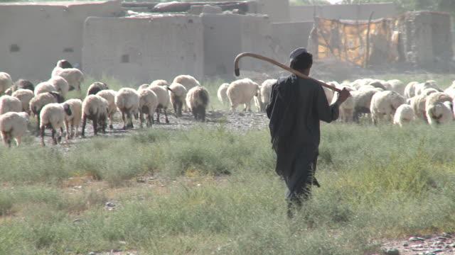 A teenage Afghan shepherd herds a flock of sheep near a village.