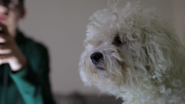 teenage boy playing video games while sitting on the couch at home - bichon frise stock videos and b-roll footage