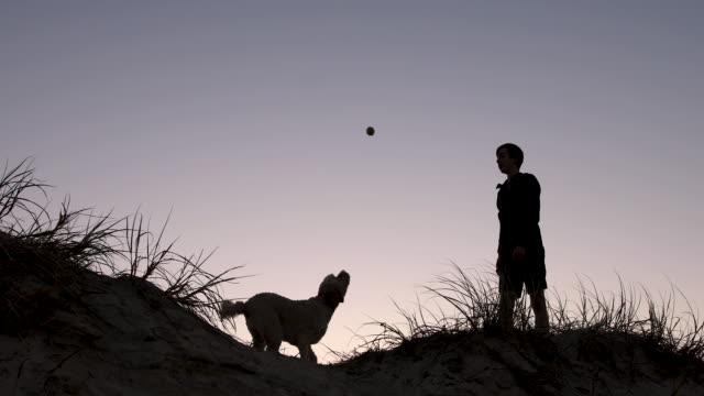 vídeos de stock, filmes e b-roll de adolescente que joga com seu cão no por do sol - young animal
