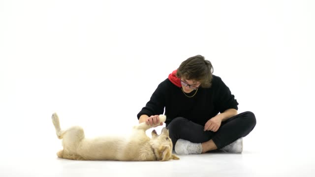 teenage boy with her dog over white background - overweight dog stock videos & royalty-free footage