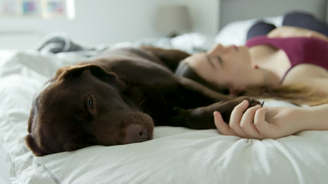 teenage girl asleep on bed with her pet dog - teenagers only stock videos & royalty-free footage