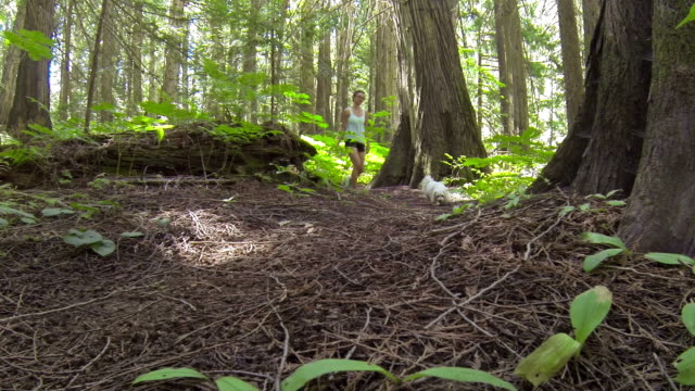 teenage girl leisurely walking through forest with small pet dog - havanese stock videos & royalty-free footage