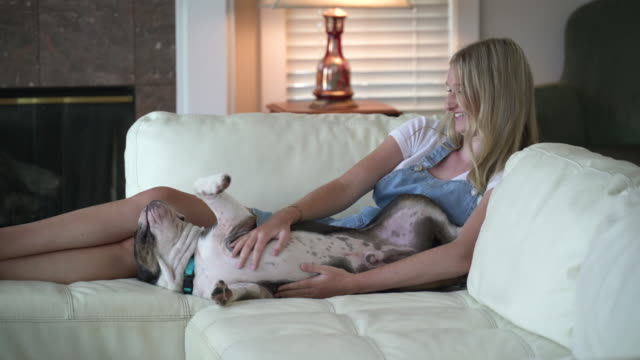 teenage girl on couch petting puppy - one teenage girl only stock videos & royalty-free footage