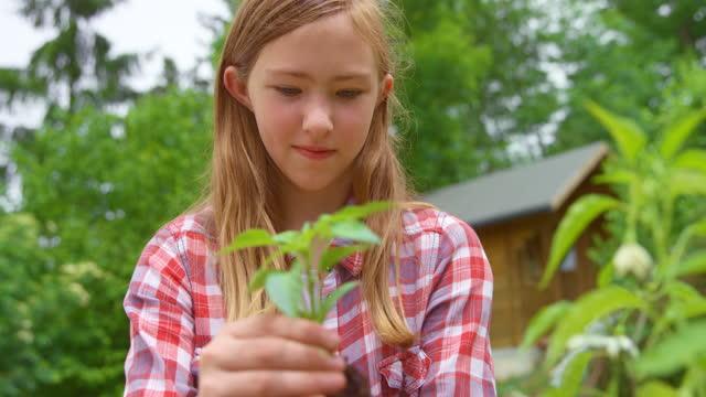外の鍋にピーマンを植える10代の少女 - one teenage girl only点の映像素材/bロール