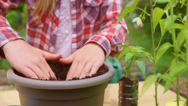 鉢に野菜の植物を植える十代の少女 - one teenage girl only点の映像素材/bロール