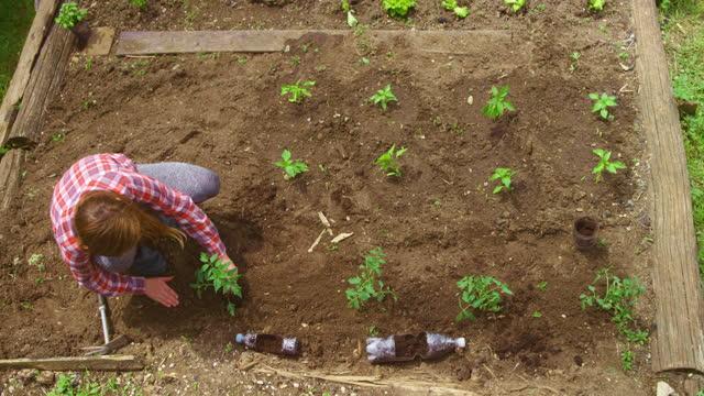 庭で野菜を植える十代の少女 - one teenage girl only点の映像素材/bロール