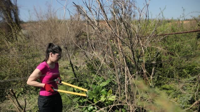 teenage girl pruning of branches with secateurs - secateurs stock videos & royalty-free footage