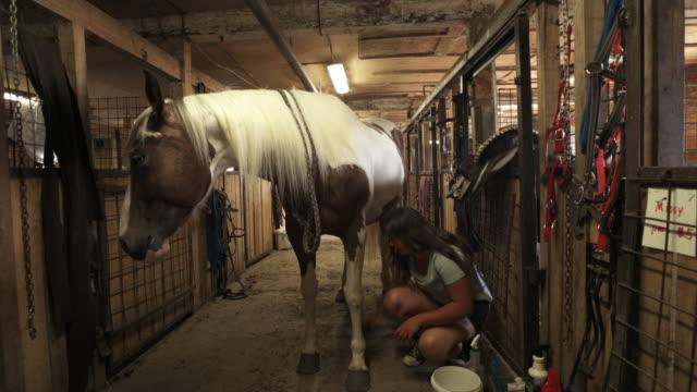 teenager-mädchen kümmert sich um pferd im stall - pferdestall stock-videos und b-roll-filmmaterial