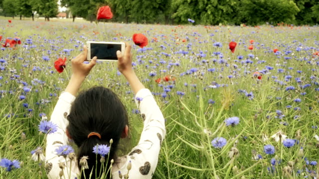 teenage girl taking mobile photos in cornflower field - photographing stock videos & royalty-free footage