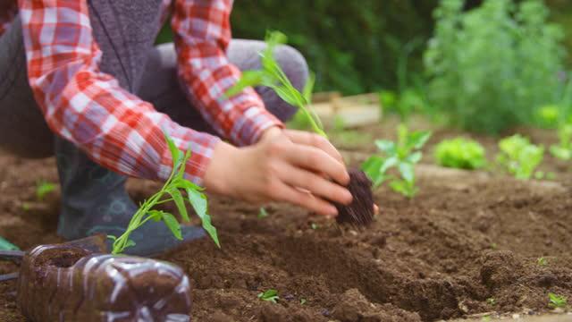 slo mo 10代の少女は、リサイクルされたボトルから植物を取り出し、庭に植えます - 作物点の映像素材/bロール