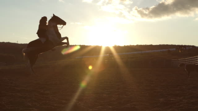 teenage girl training horse paddock sunset farm - all horse riding stock videos and b-roll footage
