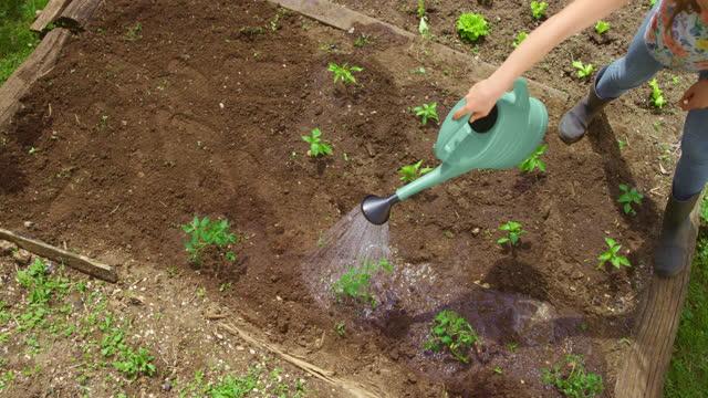 菜園で植物に水をやる十代の少女 - one teenage girl only点の映像素材/bロール
