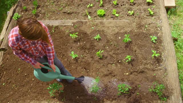 庭で野菜を散水する十代の少女 - one teenage girl only点の映像素材/bロール