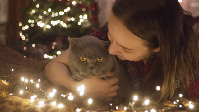 teenage girl with her cat in christmas time indoors - stroking stock videos & royalty-free footage