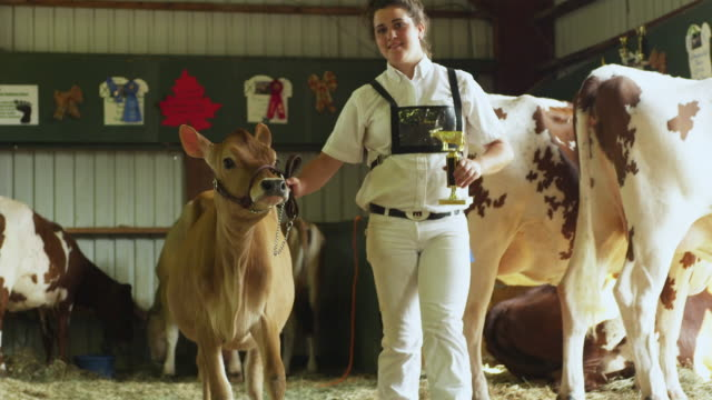 ms teenage girl (10-11) with prize cow at fair / rutland, vermont, usa - agricultural fair stock videos & royalty-free footage
