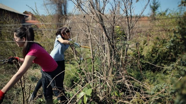 teenage girls pruning of branches with secateurs - secateurs stock videos & royalty-free footage