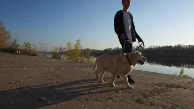 teenager boy walking with his dog - retriever stock videos & royalty-free footage