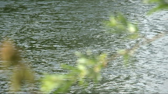 Teenager drowns in River Thames PAN across River Thames at Marlow with trees along banks of river Close up shot river with overhanging foliage Clare...