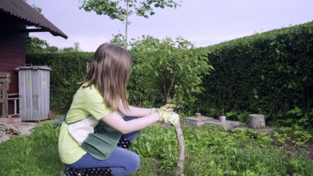 teenager girl cutting and pruning the bonsai - pruning stock videos & royalty-free footage