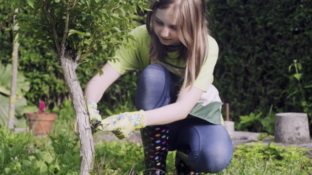 teenager girl cutting and pruning the bonsai - bush stock videos & royalty-free footage
