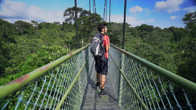 ts teenager walking on a bridge above a rainforest - exploration stock videos & royalty-free footage