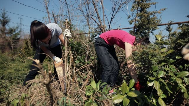 Teenagers Pruning of branches with Hand Saw