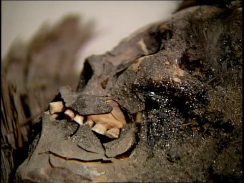 teeth are seen inside the jaw of a chinchorro black mummy. - ancient stock videos & royalty-free footage