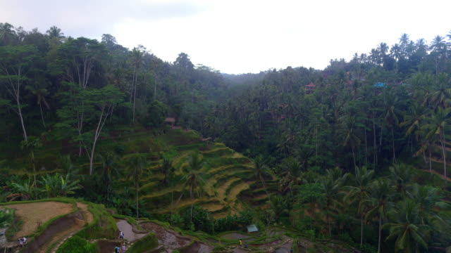 tegalalang rice terrace bali - ubud district stock videos & royalty-free footage