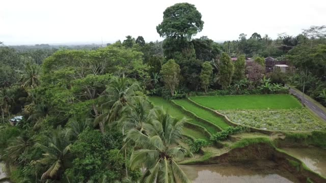 tegalalang rice terraces in ubud, bali island, indonesia - 4k aerial stock footage - ubud stock videos & royalty-free footage