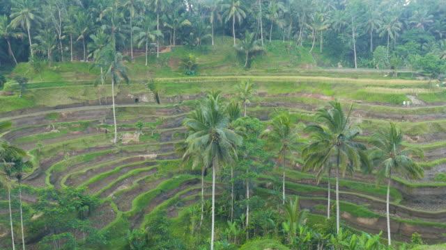 Tegalalang Rice Terrace,Ubud,Bali,Indonesia
